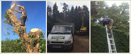 brackendale tree care tree surgery hedge cutting surrey hampshire