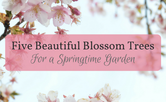 "Picture of cherry blossoms with the text ""Five Beautiful Blossoms for a Springtime Garden"""