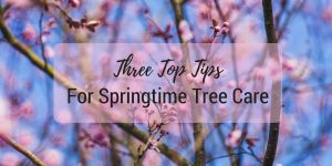 "Image of cherry blossom against a bright blue sky, and the text ""three top tips for springtime tree care"""