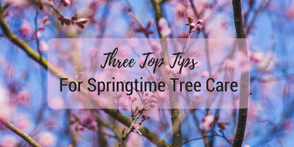 3 Top Tips For Spring Tree Care