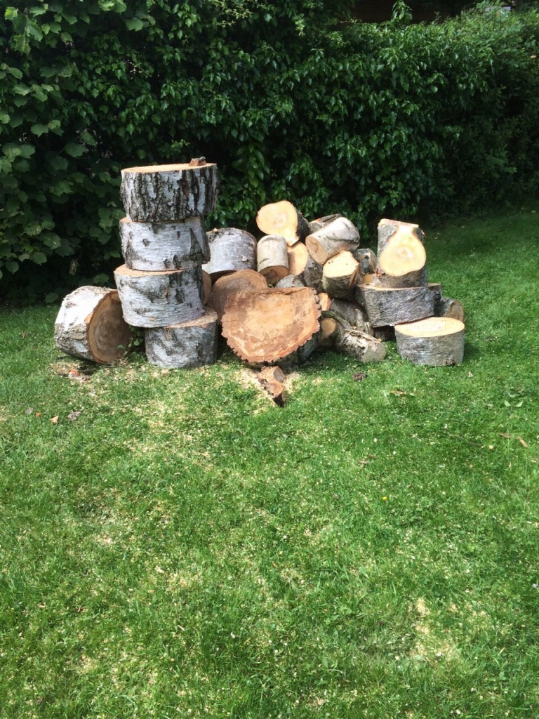 Pile of logs after a tree has been cut down