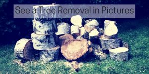 "Image of a pile of logs, and the text ""see a tree removal in pictures"""