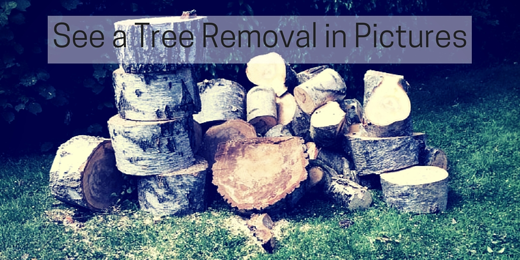 See a Tree Removal in Pictures