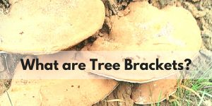 "Image of tree brackets, with the text ""what are tree brackets?"""