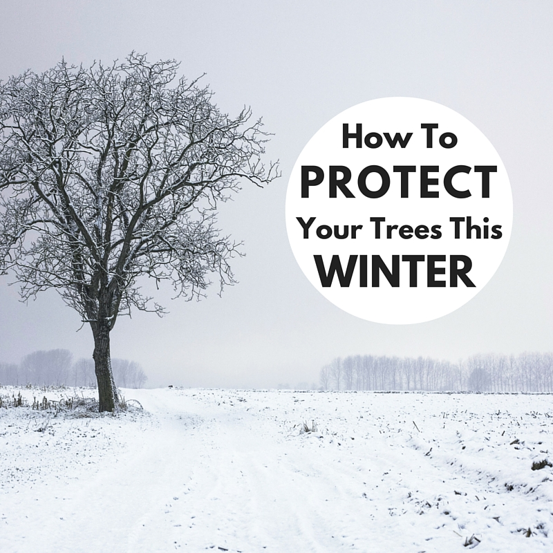 How to Protect Your Trees This Winter