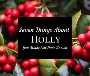 Image of holly berries with the text Seven Things about holly you might not have known