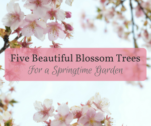 "Picture of cherry blossom with the text ""Five Beautiful Blossom Trees for a Springtime Garden"""