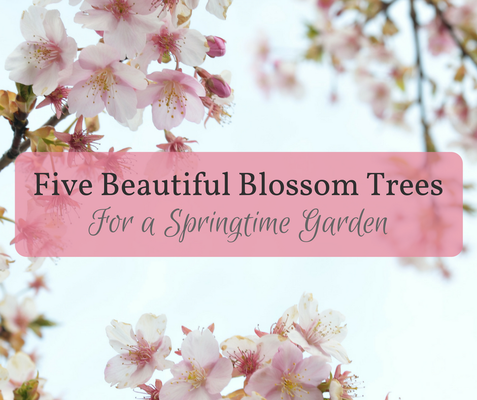Five Beautiful Blossom Trees for a Springtime Garden
