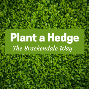 "Privet Hedge Background with the title ""plant a hedge the brackendale way"""