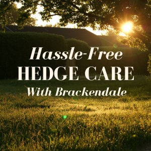"A sunlit garden with a large hedge. Text reads ""Hassle-Free Hedge Care with Brackendale""."