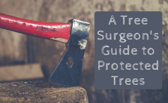 "Red-handled axe in a block of wood. Text reads ""A tree surgeon's guide to protected trees"""