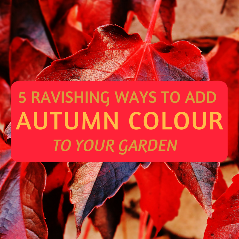 5 Ravishing Ways to Add Autumn Colour to Your Garden